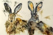 Hare Pair