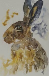 Hare, Alert