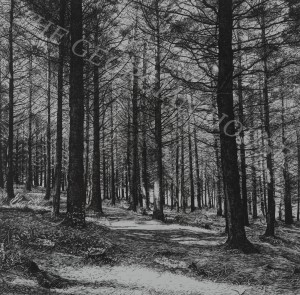 The Quiet Forest